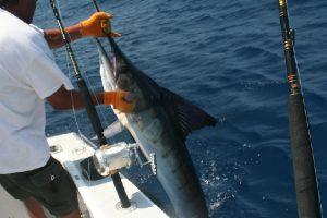 Los Cabos fishing, los cabos real estate, cabo real estate, cabo san lucas real estate, nick fong