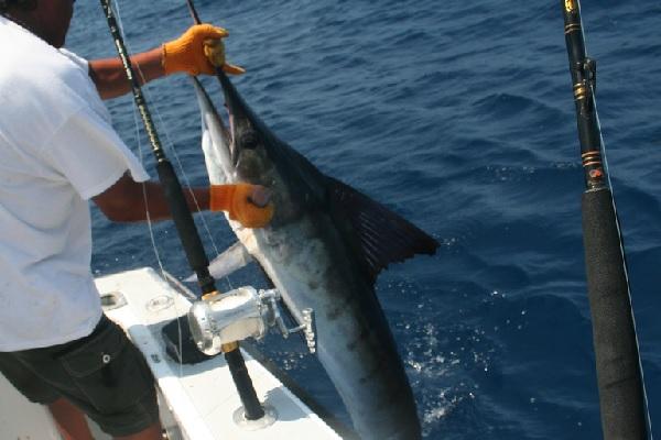 los cabos fishing, Cabo San Lucas fishing, los cabos real estate, cabo real estate, cabo san lucas real estate, nick fong
