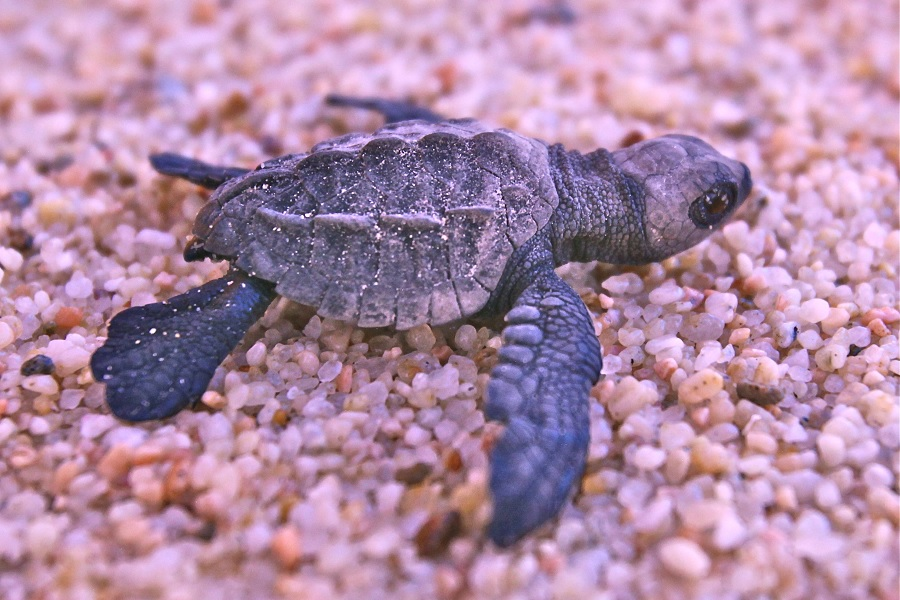 Cabo eco-tour, cabo sea turtles, los cabos agent, nick fong