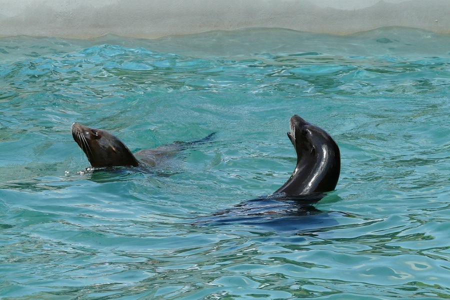 sea lions in Cabo, los cabos agent, nick fong